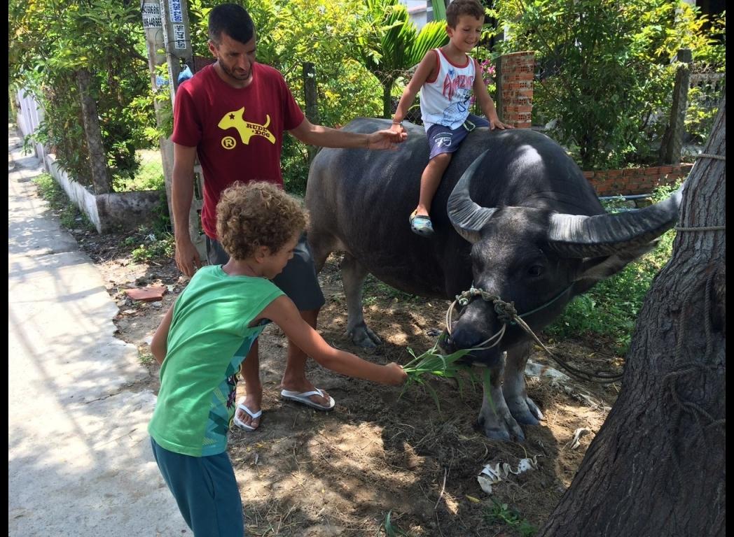 ridding buffallo